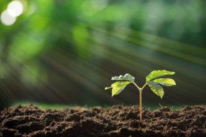 Steinlechner Work Life Motivation - fokussiert wachsen